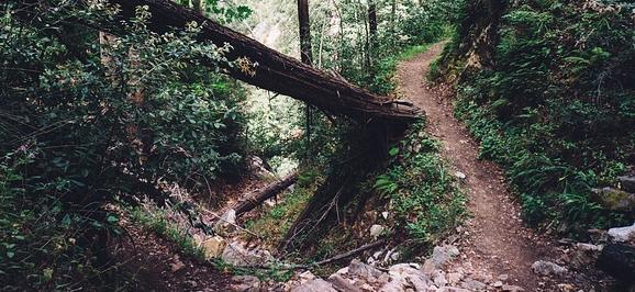 An Entrepreneur's Road